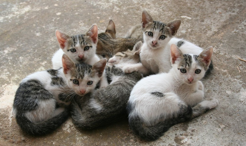 Ways To Get Rid Of Feral Cats