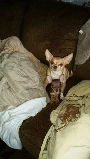 This is Chewy and Coco