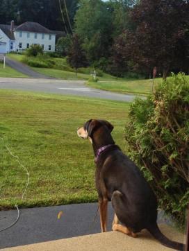 Toby on patrol on Merriam Way.