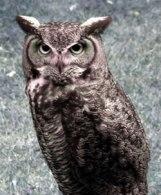 OwlFig1