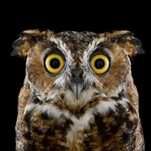 brad-wilson-owl-02