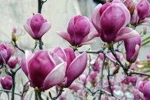 april-flowers.jpg