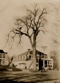 Parson Elm - Upton Historical Society Images