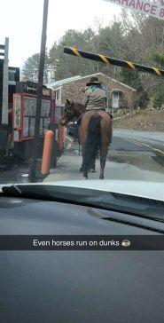 upton horse 4